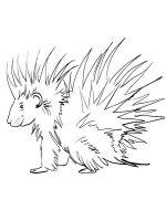 Porcupine-coloring-pages-5