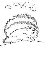 Porcupine-coloring-pages-7