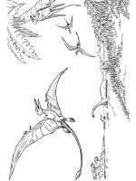Pterodactyl-coloring-pages-22