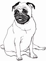Pug-coloring-pages-2