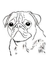 Pug-coloring-pages-3