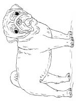 Pug-coloring-pages-4