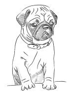 Pug-coloring-pages-5
