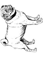 Pug-coloring-pages-7