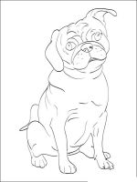 Pug-coloring-pages-8