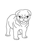 Pug-coloring-pages-9