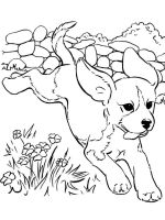 Puppy-coloring-pages-12