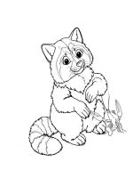 Raccoon-animal-coloring-pages-337