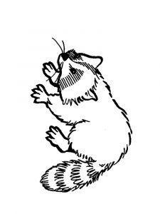 Raccoon-animal-coloring-pages-345