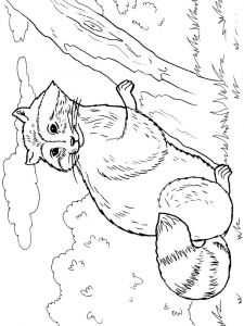 Raccoon-animal-coloring-pages-346