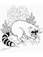 Raccoon-animal-coloring-pages-348