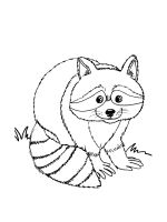 Raccoon-coloring-pages-1