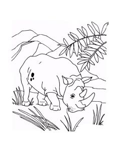 Rhino-animal-coloring-pages-335