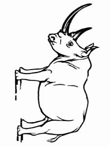 Rhino-animal-coloring-pages-346