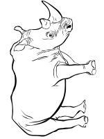 Rhino-animal-coloring-pages-348