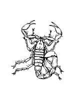 Scorpion-coloring-pages-2