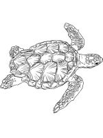 Sea-Turtle-coloring-pages-14