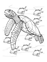Sea-Turtle-coloring-pages-2