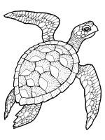 Sea-Turtle-coloring-pages-25