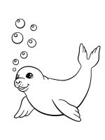 Seals-coloring-pages-4