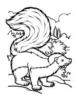 Skunk-coloring-pages-13