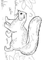 Skunk-coloring-pages-24