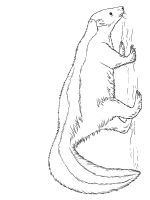 Skunk-coloring-pages-25