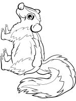 Skunk-coloring-pages-3