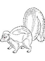 Skunk-coloring-pages-4