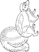 Skunk-coloring-pages-8
