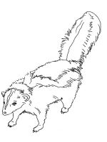 Skunk-coloring-pages-9