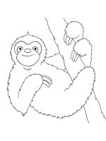 Sloth-coloring-pages-2