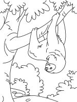 Sloth-coloring-pages-6