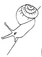 Snail-coloring-pages-1