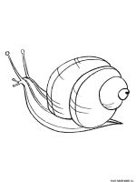 Snail-coloring-pages-14