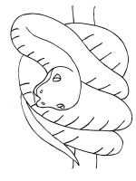 Snake-coloring-pages-1
