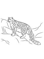 Snow-Leopard-coloring-pages-11