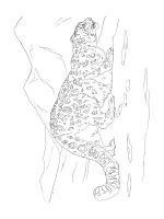 Snow-Leopard-coloring-pages-12