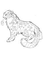 Snow-Leopard-coloring-pages-15