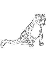 Snow-Leopard-coloring-pages-16