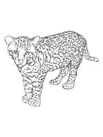 Snow-Leopard-coloring-pages-18