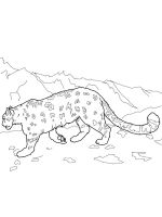 Snow-Leopard-coloring-pages-2