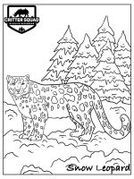Snow-Leopard-coloring-pages-20