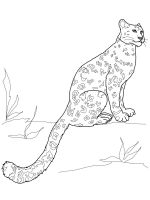 Snow-Leopard-coloring-pages-21