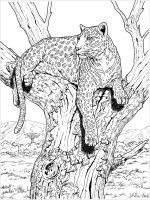 Snow-Leopard-coloring-pages-23