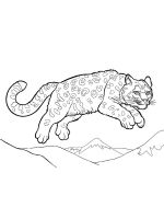 Snow-Leopard-coloring-pages-5
