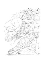 Snow-Leopard-coloring-pages-6