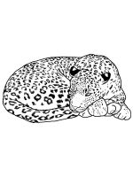 Snow-Leopard-coloring-pages-8