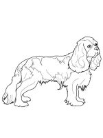 Spaniel-coloring-pages-1