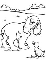 Spaniel-coloring-pages-2
